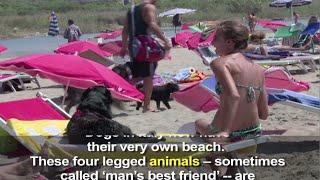 Học Tiếng Anh Qua Tin Tức - Nghĩa Và Cách Dùng Từ Animal (VOA)
