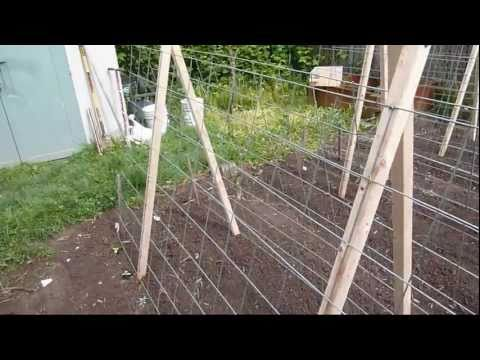 Garden Trellis for Cucumbers and Melons