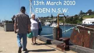 Eden Australia  City new picture : A Day out in Eden NSW Australia Stingrays on the shoreline.