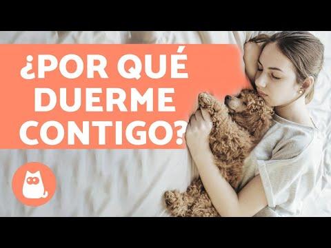 ¿Por qué tu perro duerme contigo? - 6 motivos que te encantarán