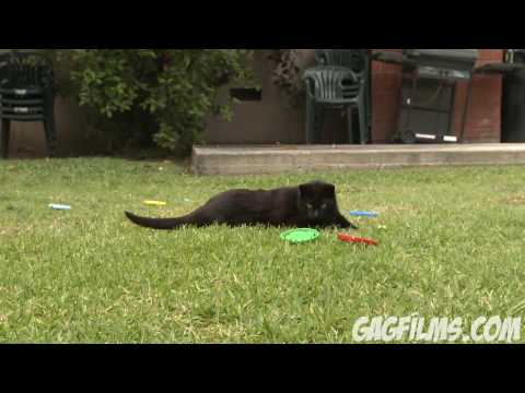Cat loses weight OUTTAKES
