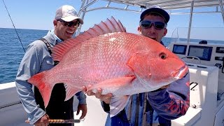 Video Searching for Giant Cobia and Monster Snapper Fishing, Catch N Cook - 4K MP3, 3GP, MP4, WEBM, AVI, FLV Agustus 2018