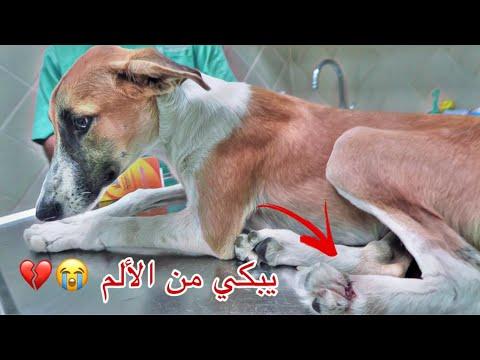 انقاذ كلب مكسوره رجله من المنطقه المهجوره