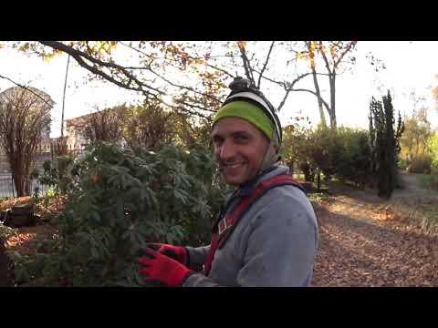 Варшава. Украшаем деревья в парку. Сколько получает работник!