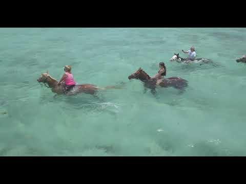 Horseback Riding - Cayman Style