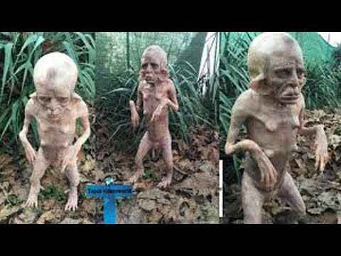 Top 10 Most Mysterious Creature Caught On Camera - Unbelievable Things Caught On Tape