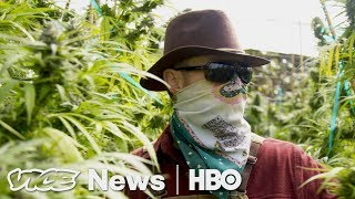 Weed (CA) United States  city photo : Prop 64 Legal Weed in California: VICE News Tonight on HBO (Full Segment)