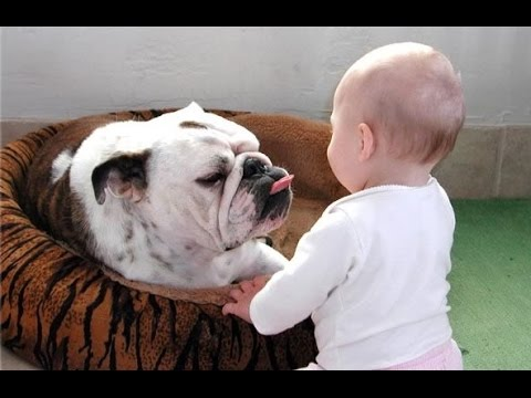 Funny Bulldog and Baby Video Compilation 2014 [NEW HD]