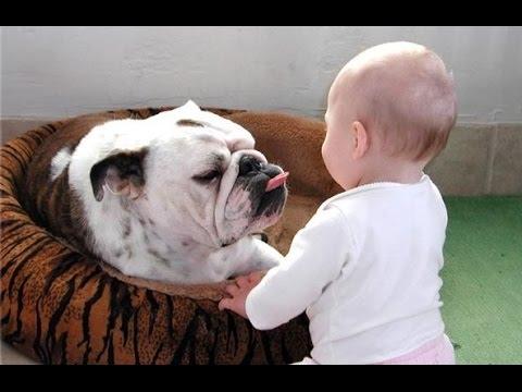 bulldog inglese e bambino! amore puro.
