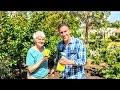 Q&A w/ Dr. Suzanne DeBenedittis of GreenerWayAssociates.org | Girdling & Sunburn & Pest Control