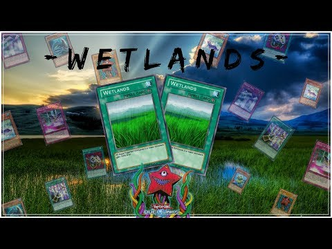 [Yu-Gi-Oh! Duel Links] Wetlands l totally worth it! l King Of Games