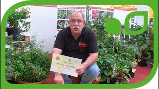 Zwerghimbeere Baby Dwarf gewinnt Bronze Medaille an der Plantarium Show