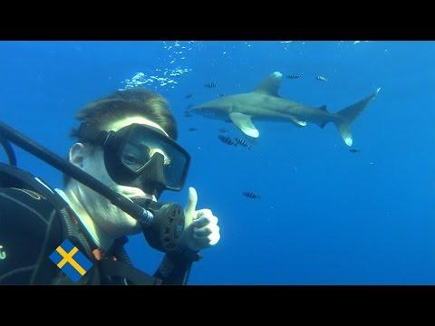 Shark Diving (Red Sea, Egypt)_Legjobb videók: Merülő helyek