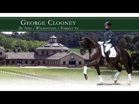 Hengst George Clooney