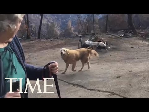 Couple Returns To Home Lost In California's Camp Fire To Find Their Dog Waiting For Them | TIME