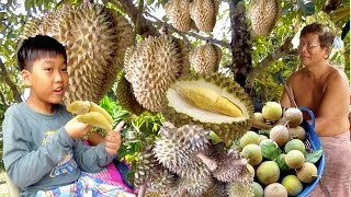 Video Durian Monthong from Koh Kong Province   Durian Season in Cambodia MP3, 3GP, MP4, WEBM, AVI, FLV Agustus 2018