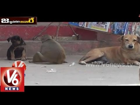 Video Funny Monkey And Dog Talk  About Aadhaar Card || Jajjanakare Janaare || V6 News download in MP3, 3GP, MP4, WEBM, AVI, FLV January 2017