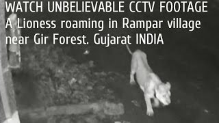 Nonton Watch Unbelievable Cctv Footage A Lioness Roaming In Rampar Village Near Gir Forest Film Subtitle Indonesia Streaming Movie Download