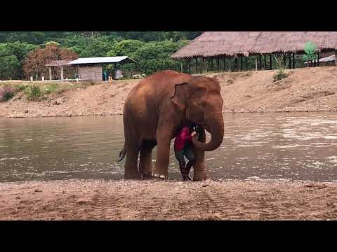 Elephant Acts Protective Over Her Favourite Person