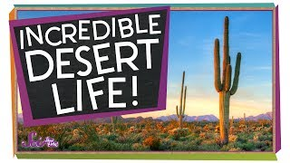 Amazing Ways to Live in the Desert! by SciShow Kids