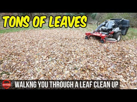 , title : 'How To Do A Fall Leaf Clean Up - $145 In 1.5 Hours, Bagging Leaves | Simple Basic Clean Up'