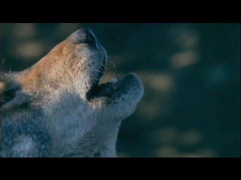 Der Wolf, das Lamm, der Landwirt und die EU: Entsch ...