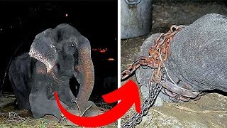 Elephant Who Lived In Chains For 50 Years Has A New Life by Did You Know Animals?