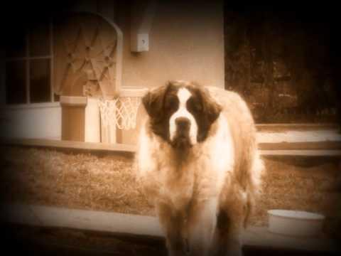 Tekst piosenki John Lee Hooker - Throw This Old Dog A Bone po polsku