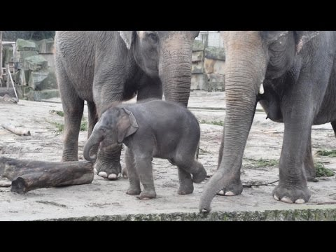 Berlin: Tierpark Berlin - Kommentierte Elefanten Fütterung mit Elefantenbaby