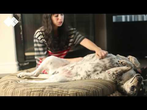 5 modi per capire i segnali dei cani - da vedere