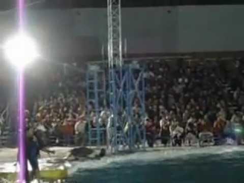 el show de los delfines fliper y sisi