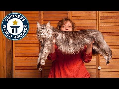 stewie-il-gatto-piu-lungo-del-mondo-20