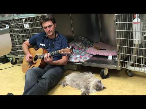 il-veterinario-che-canta-per-la-gatta