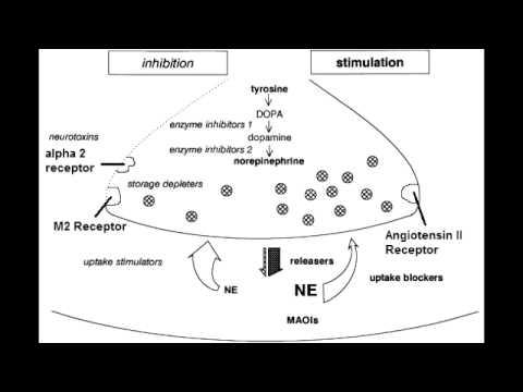 Autonomic Drugs - Noradrenergic Nerve Terminal
