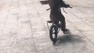 Monyet naik sepeda