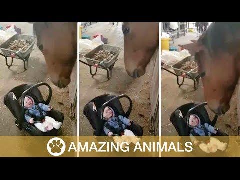 Hevonen keinuttaa ja lapsi nauraa
