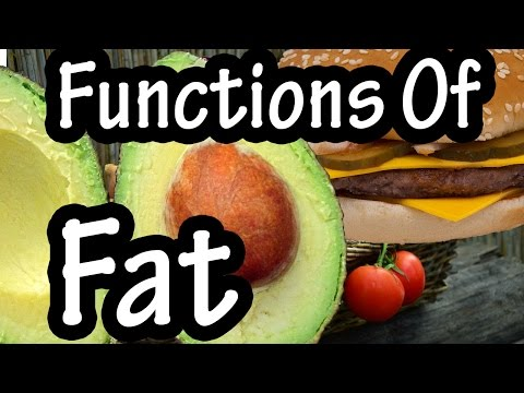 Functions Of Fat - How The Body Uses Fats