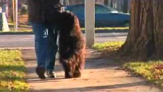 Dog Training - Teach Your Dog How To Heel