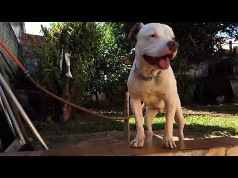 Lacraia - Pets Na Net