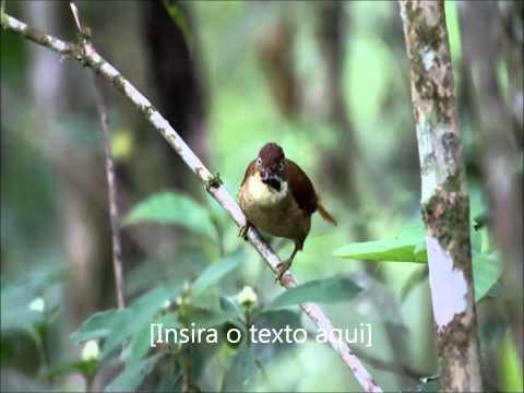 Barranqueiro-de-olho-branco - Cristiano Voitina