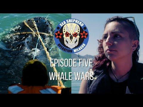 """Op Milagro V Episode 5 - """"WHALE WARS"""""""