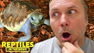 EXTREMELY RARE BABY SCALELESS TORTOISE?!!! REPTILES IN THE NEWS by AnimalBytesTV