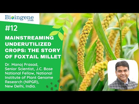 Webinar on Mainstreaming underutilized crops: The story of foxtail millet