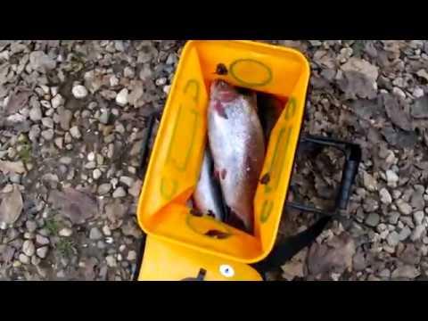 Форелевая рыбалка за 27.10.2018