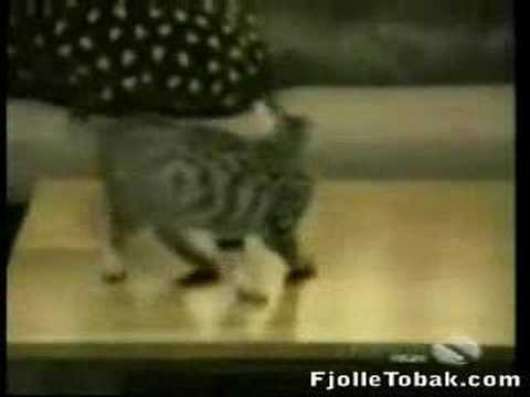 Another Video With Funny Cats =)