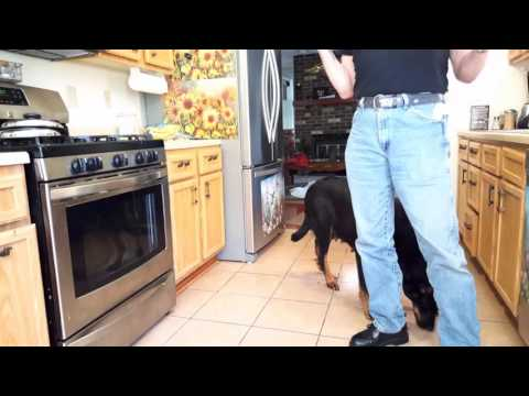 What makes Beaucerons special