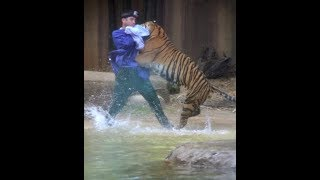 Video When Zoo Animals Attack Compilation Part 3 MP3, 3GP, MP4, WEBM, AVI, FLV September 2018