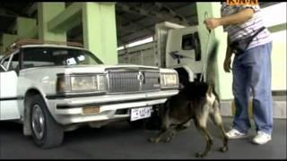 KNN Channel Kurdish Dog Sagi Kurdi La Slemani Kurdistan