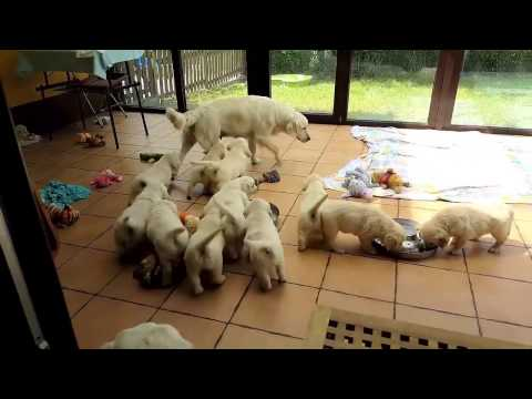 Making of - 360 VR Puppies video