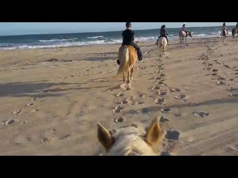Horseback Riding on the beach in the Outer Banks